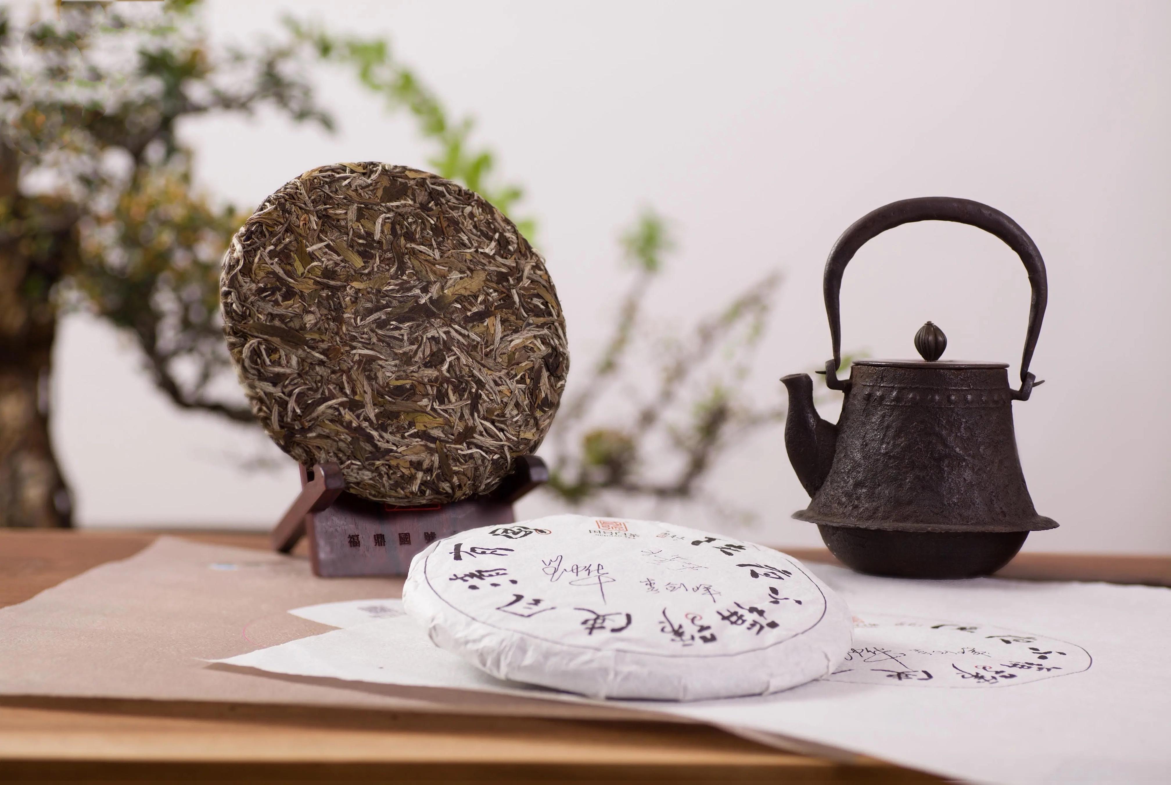 白茶发展史